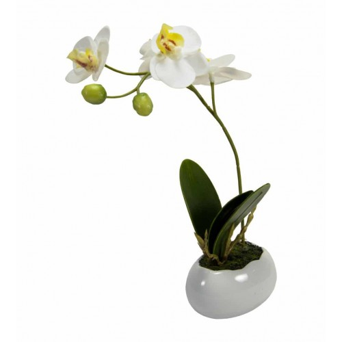 ORCHIDEA BUTTERFLY CON VASETTO EGG